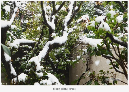 雪(TZ406800) posted by (C)うら