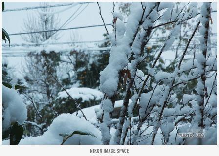 雪(D7008145) posted by (C)うら