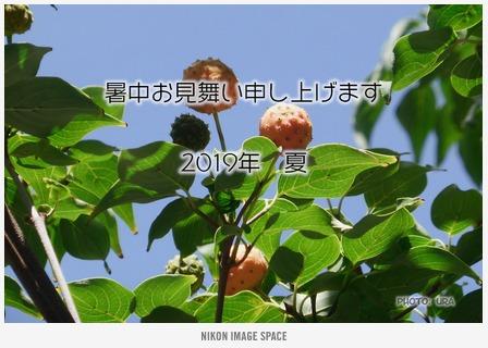 ヤマボウシ(TZ403242) posted by (C)うら