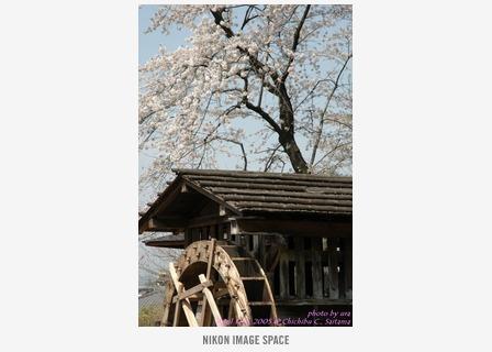 水車と桜() posted by (C)うら