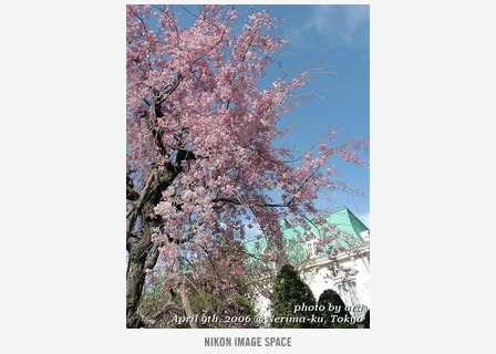 洋館と桜() posted by (C)うら