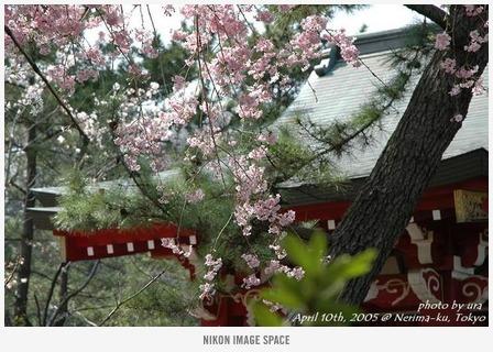 厳島神社() posted by (C)うら