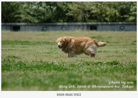 犬() posted by (C)うら